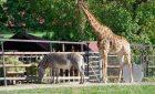 Зоопарк открыт!